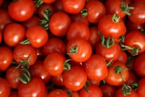 tomatoes-camel csa 21-08-09