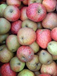 apples-lord-hindlip-camel-csa181009