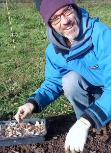 Garlic planting 08-10-09 MMc - cropped