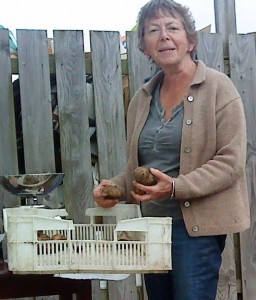 weighing-potatoes-camel-csa 25-09-09 