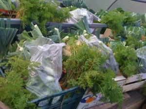 seasonal-veg-boxes-camel-csa 27-11-09