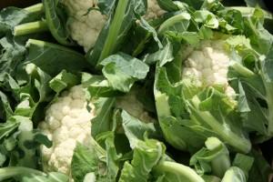 cauliflower-camelcsa