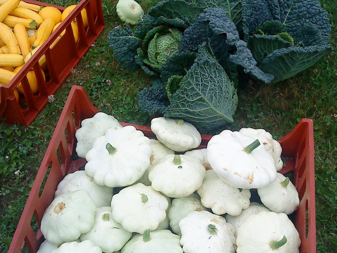 White patty pan squash how to cook the patty pan
