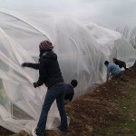 First polytunnel cover 06-03-11 11
