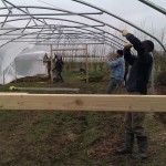 First polytunnel cover 06-03-11 8