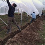 First polytunnel cover 06-03-11 9