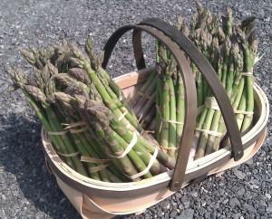 cornish-asparagus-camelcsa-240411