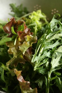salad leaves-camel csa