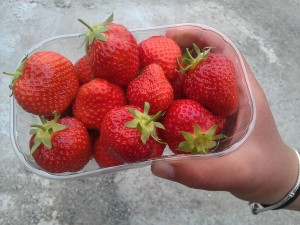 strawberries-camelcsa-270613