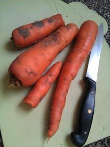 carrots-camelcsa-150214
