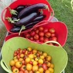 aubergines-tomatoes-camelcsa-180714