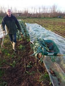leek-harvesting-camelcsa-020115
