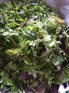 mixed-salad-leaves-camelcsa-160115