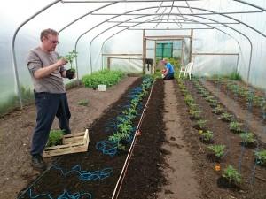 tomato-planting-camelcsa