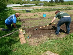 prepping-vegbed-camelcsa-0515