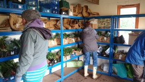 packing-shed-camelcsa-15011