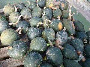 acorn-squash-camelcsa-111116