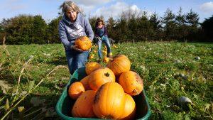 pumpkin-harvest-camelcsa-231017/1