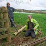 rabbit-proof-fence-treraven-farm-camelcsa-010219