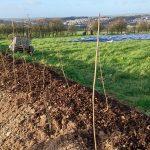 new-hedge-treravenfarm-camelcsa-180219