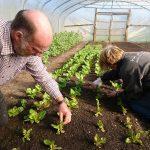 harvesting-mixed-winter-salad-leaves-camelcsa-150219