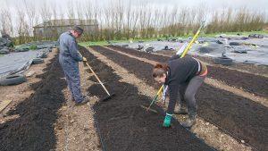 Prepping-veg-beds-camelcsa-0319