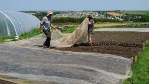 planting-winter-brassicas-camelcsa-270619