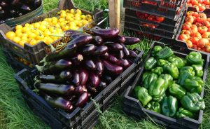peppers-aubergines-tomatoes-camelcsa-310819