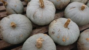 crown-prince-squash-closeup-camelcsa-061219