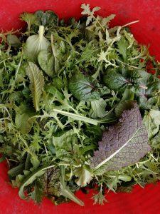 mixed-salad-leaves-camelcsa-210220