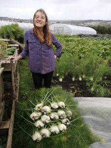 harvesting-fennel-camelcsa-210820