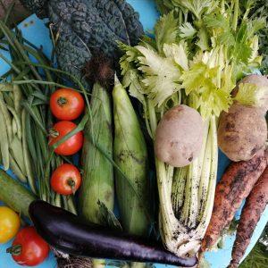 veg-share-contents-camelcsa-040920