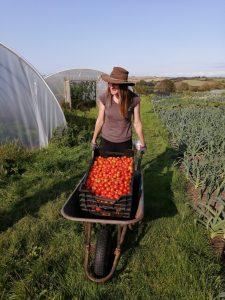 tomatoes-camelcsa-100920
