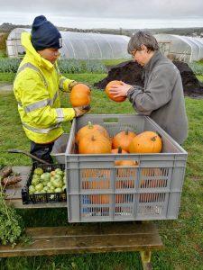sorting-pumpkins-camelcsa-231020
