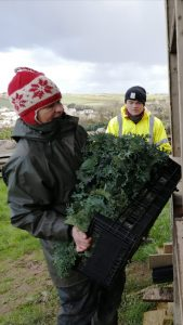 harvesting-re-russian-kale-camelcsa-041220
