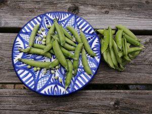podded-peas-camelcsa-050621