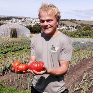 tomato-harvest-camelcsa-130821